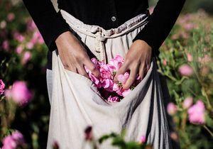 Parfum : le retour en Grasse