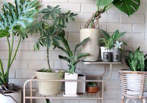 15 idées pour mettre son balcon au vert
