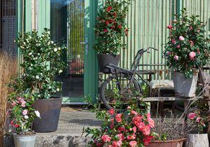 conseils et astuces pour de belles plantes elle d coration. Black Bedroom Furniture Sets. Home Design Ideas