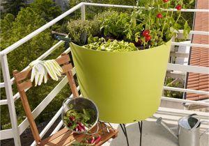 Je veux un potager sur mon balcon !