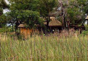 Un thé au Botswana