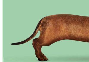 « Le Teckel » : un film qui a du chien !
