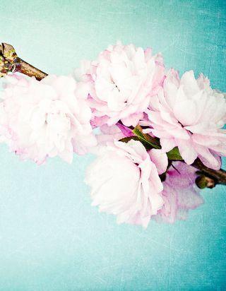 Prénoms de fleurs