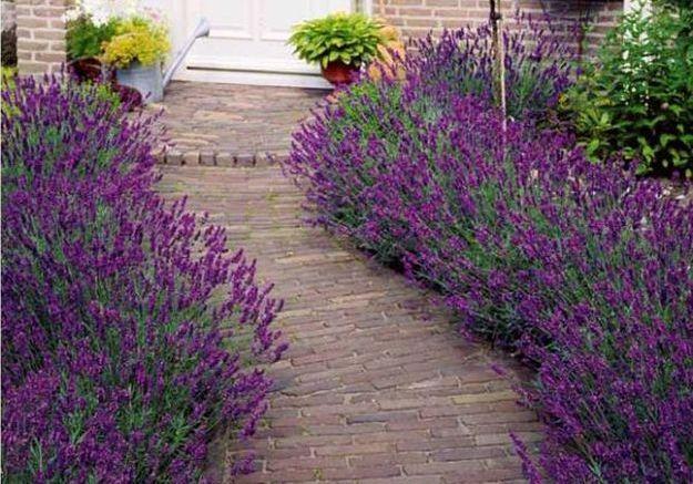 Connu Les plantes typiques du sud de la France - Elle Décoration XD47