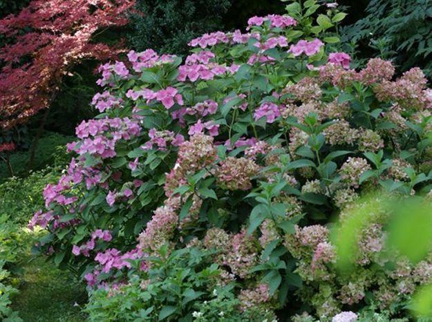 De belles fleurs dans votre massif fleuri g ant elle d coration - Creer un massif ...