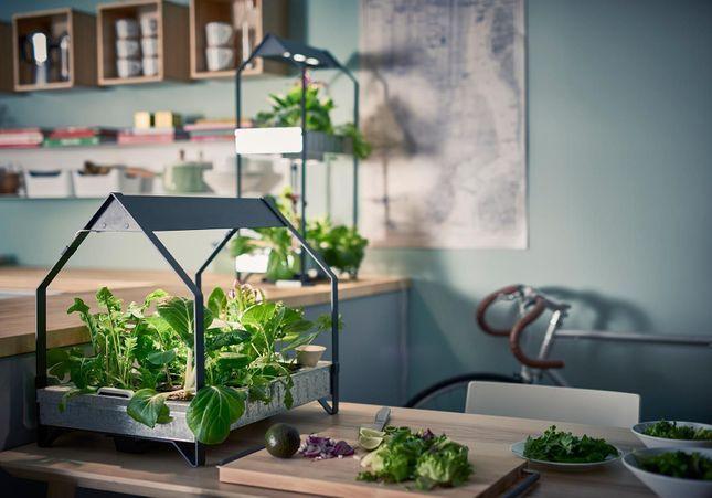 Voici la méthode Ikea pour faire pousser du basilic dans son salon