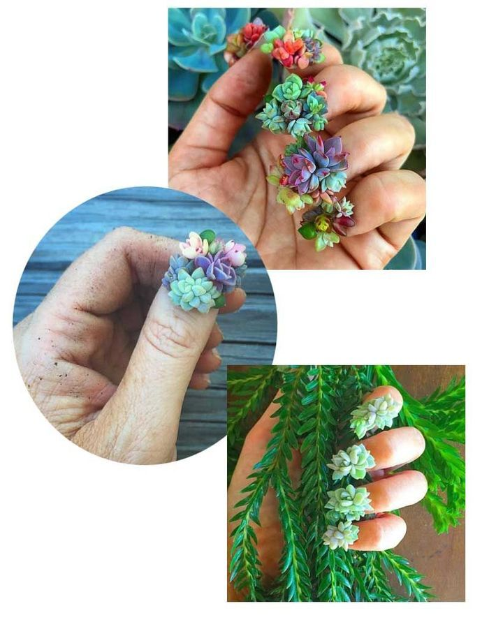 Les Succulent nails