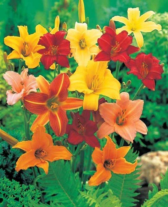 5 fleurs pas ch res planter en hiver elle d coration for Plantes exterieur hiver