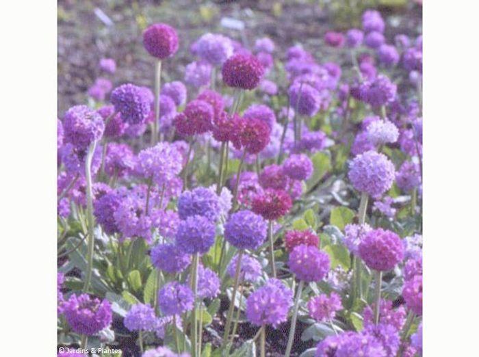 Nos 5 fleurs pr f r es pour l hiver elle d coration for Decoration exterieur hiver