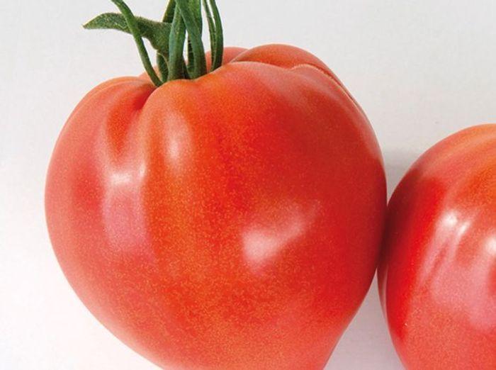 Nos vari t s de tomates pr f r es elle d coration - Planter des tomates coeur de boeuf ...
