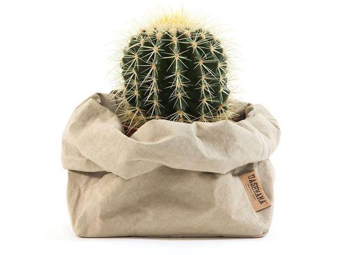 Un cactus dans un pot original