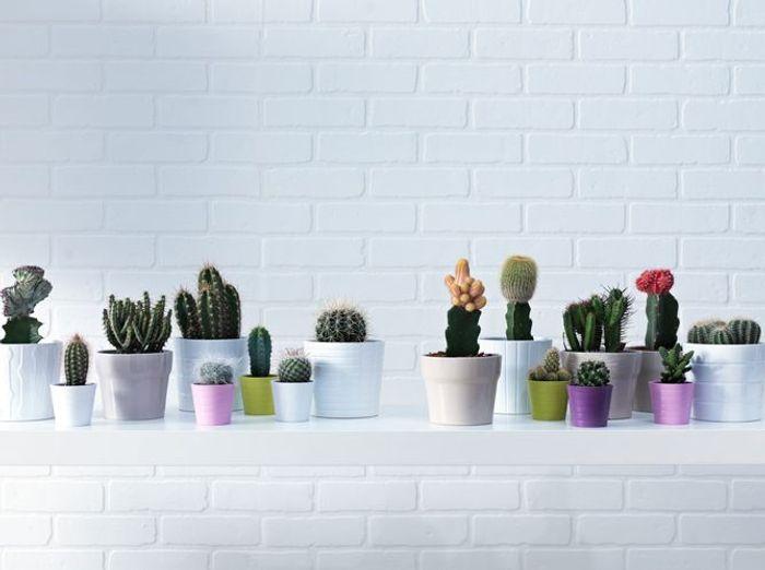 Une multiplication de cactus