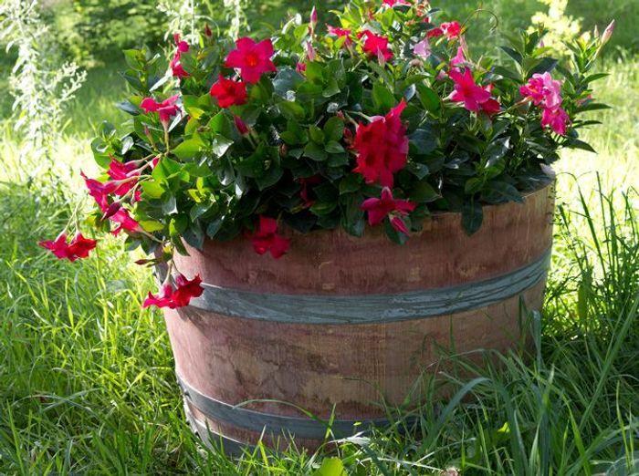 Decoration jardiniere exterieure for Le jardin de venus x