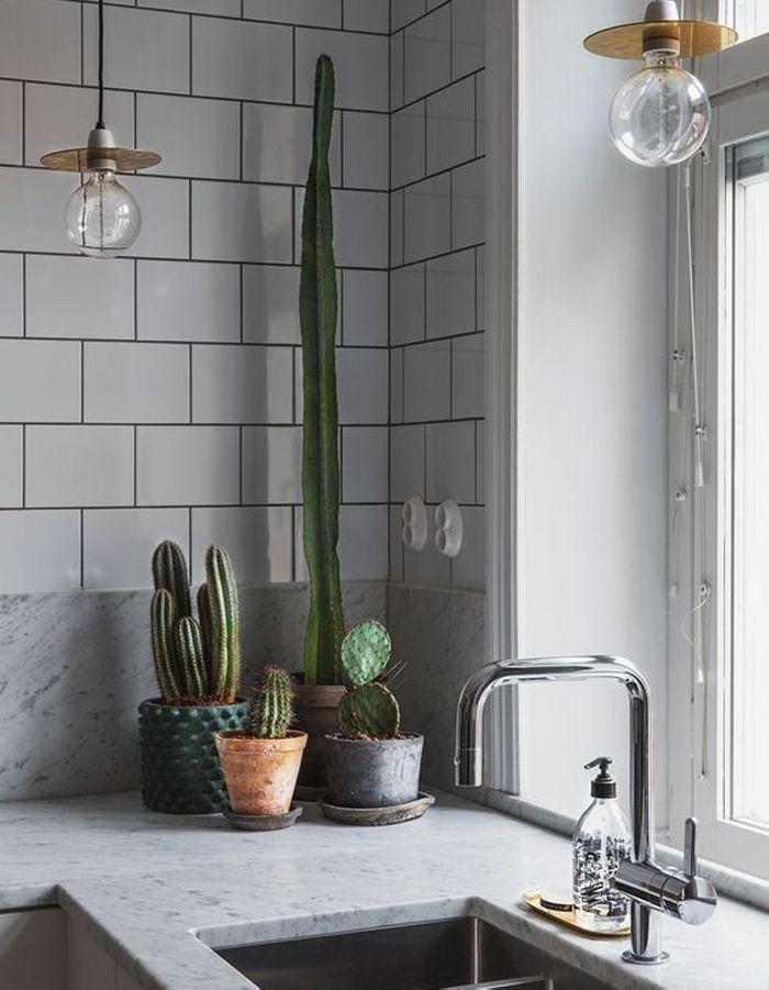 Cactus accumulés sur la plan de travail de la cuisine