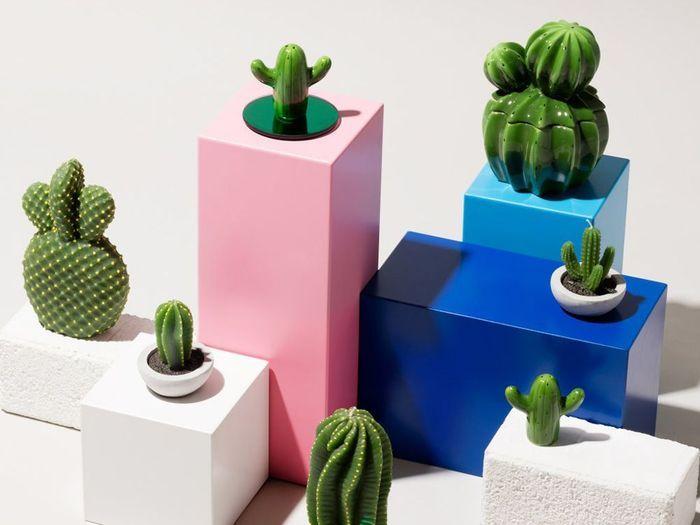 Une petite boîte cactus