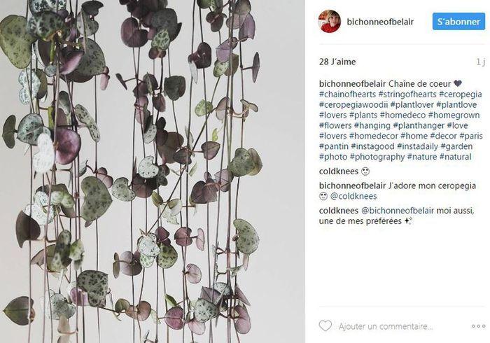 Plantes tendance sur instagram top 5 des plantes les for Chaine de coeur plante entretien