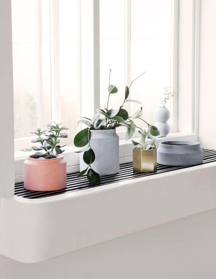 Un rebord de fenêtre qui accueille des plantes