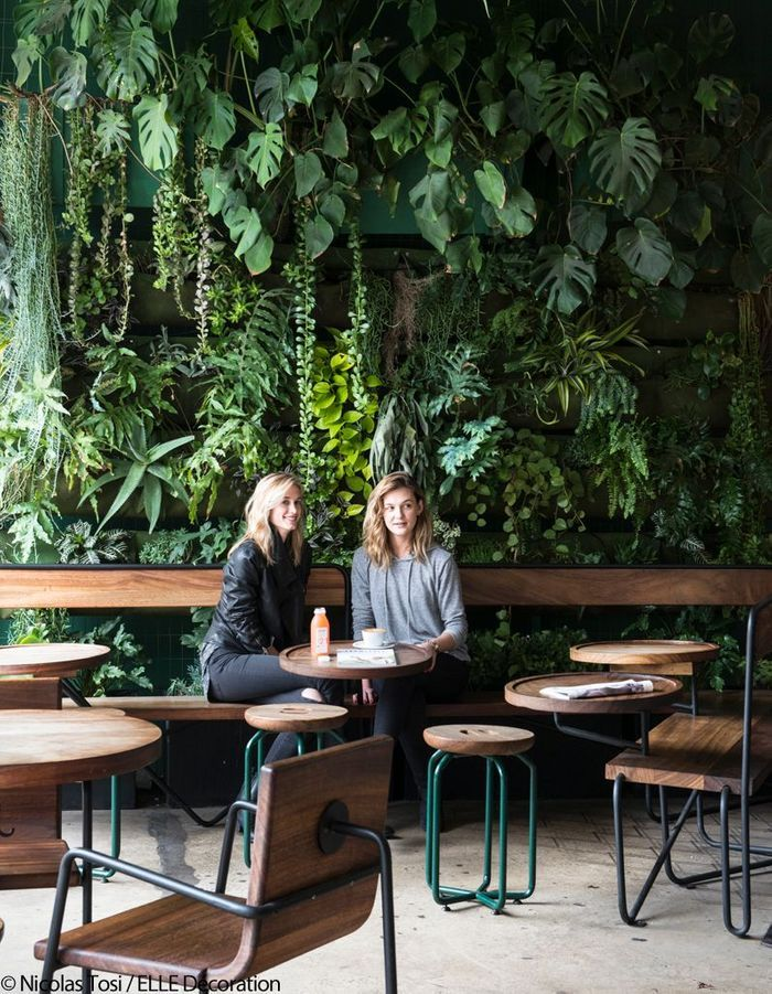 Verve Coffee, café ambiance jungle