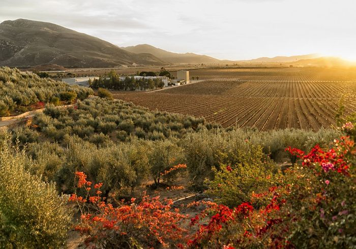 Valle de Guadalupe, au Mexique
