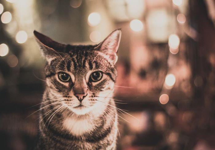 Découvrez nos adresses de bars à chats en France