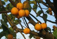 5 pommiers d'ornement pour décorer mon jardin