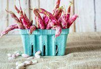 4 légumes secs pour un hiver sans fringale