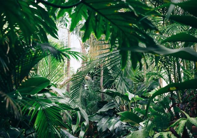 vente de plantes à paris